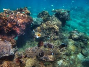 Nosy Hara snorkel